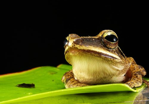 Video To Learn All About Tree Frogs